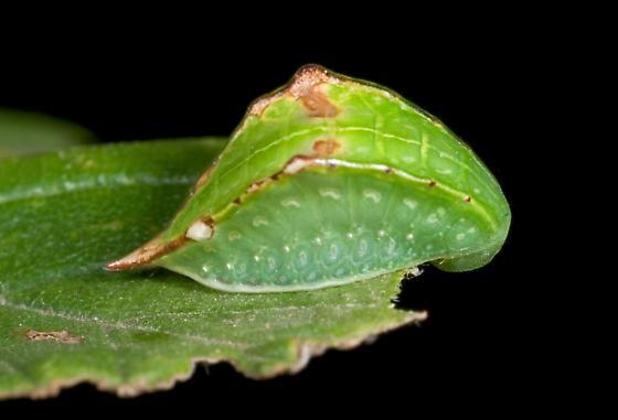 Skiff Slug