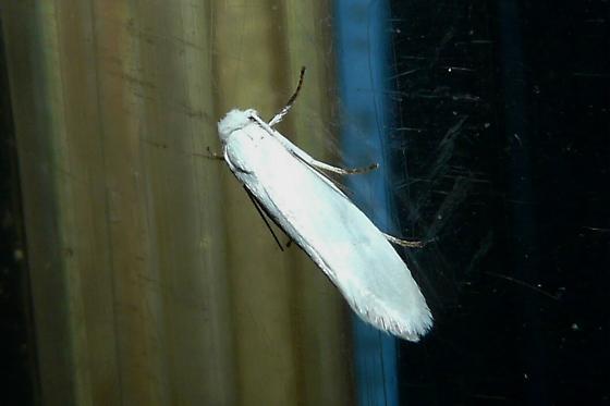 Unknowm Moth