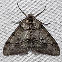 Genus Phigalia - Phigalia strigataria