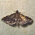 Yellow-spotted Webworm Moth - Hodges #5176 (Anageshna primordialis) - Anageshna primordialis