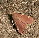 Moth ID Please - Hypsopygia olinalis