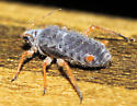 030612Aphid