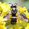 Anthidiini bee on Solidago nemoralis - Stelis louisae