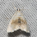 Hodges#4881 - Lipocosma sicalis