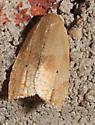 Moth to porch light - Coelostathma discopunctana