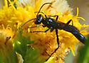 Silverado Wasp for ID - Podalonia argentifrons - male