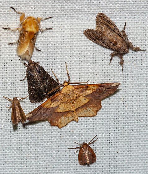 and moths on the sheets!