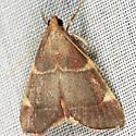 Moth - Hypsopygia olinalis