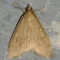 Smartweed Borer - Ostrinia obumbratalis