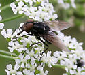 Fly ID Request [2008]