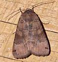 Unidentified Moth-02-20120823 - Xestia smithii