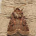 Ruddy Quaker - Protorthodes oviduca