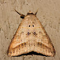Withered Mocis Moth - Hodges #8744 - Mocis marcida