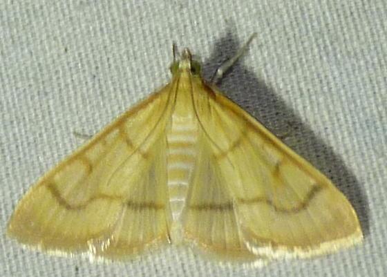 7/29/19 moth