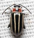 Beetle - Disonycha pensylvanica