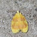 Oak Leaftier - Acleris semipurpurana