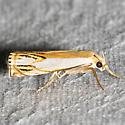Double-banded Grass-veneer - Hodges#5362 - Crambus agitatellus