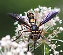 Physoconops excisus? - Physoconops excisus - female