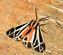 Which tiger is this? - Apantesis