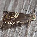 Clover Head Caterpillar Moth - Grapholita interstinctana
