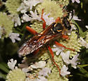 Specidae, Great Golden Digger Wasp - Sphex ichneumoneus