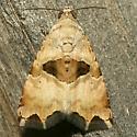 Moth - Cobubatha ochrocraspis