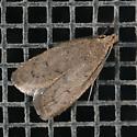 Moth - Inga obscuromaculella
