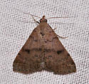 Is this one of the Litter moths? - Bleptina caradrinalis