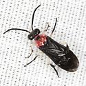 Sawfly ? - Liliacina diversipes