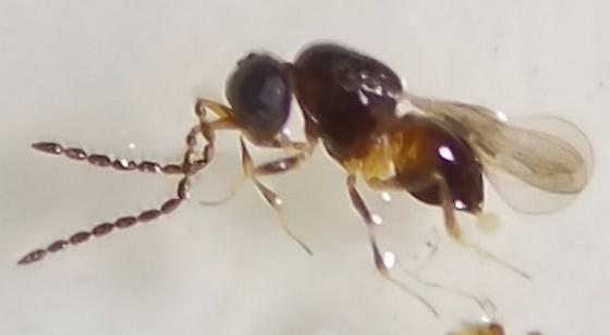 Small Wasp: ID Request