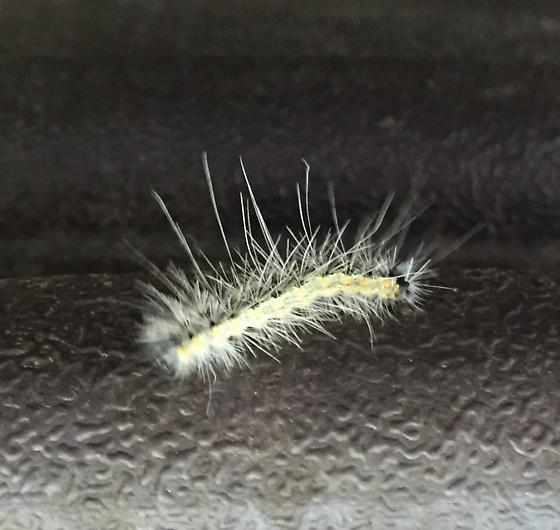 Please help identify