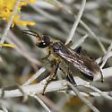 Unknown wasp - Prionyx
