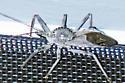 Arilus cristatus (Wheel Bug) - Arilus cristatus