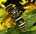 What wasp please? - Ancistrocerus catskill - female
