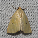 Black-bordered Lemon Moth - Hodges#9044 - Marimatha nigrofimbria