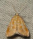 xanthophysa moth - Xanthophysa psychicalis