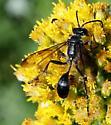 unkown Thread-waisted Wasp - Isodontia