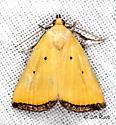 Black-bordered Lemon Moth - Marimatha nigrofimbria