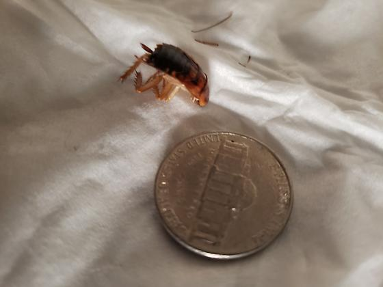 Bug ID request