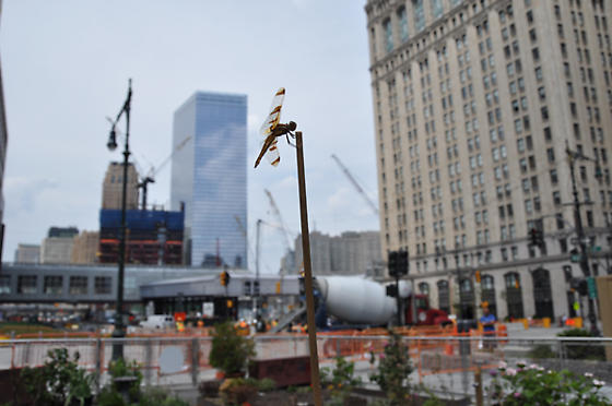 Dragonfly  in new york city - Libellula semifasciata