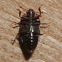 Nitidulidae? - Epuraea monogama