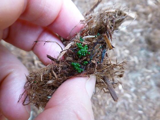 Green deposits