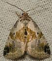 black-dotted maliattha - Maliattha synochitis
