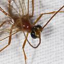IMG_8269 - Enicospilus purgatus