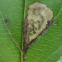 Leaf mines - Stigmella rhamnicola