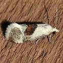 3807 - Phalonidia lepidana