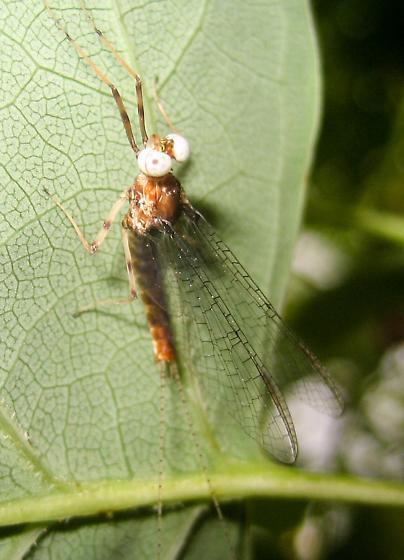 Mayfly 1
