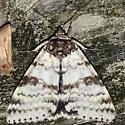White Underwing - Catocala relicta