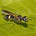 Bee: 2012.06.24.29764 - Philanthus gibbosus