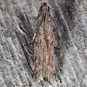 Homoeosoma stypticella - Phycitodes reliquellum